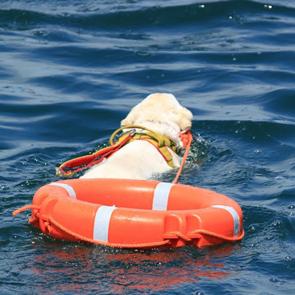 Salvataggio in acqua con cani