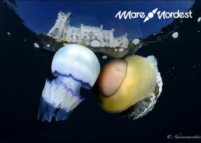 Concorso di fotografia subacquea